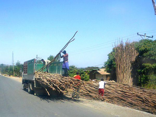 Bau-Gerüste werden aus Baumstangen erstellt