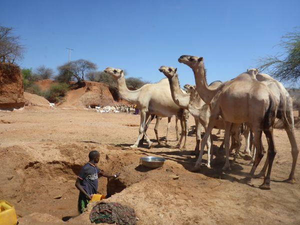 Wasser für die Kamele