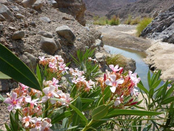 im Wadi Shawaka gibt es noch Wasser vom letzten Regen