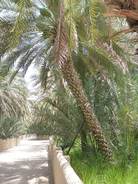 genossenschaftliche Palmoase
