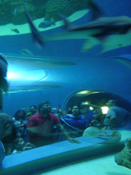 im Aquarium wird die Meereslandschaft nachgestellt - draußen gibts Korallenriffe